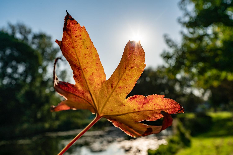Zeven tips voor herfstfotografie